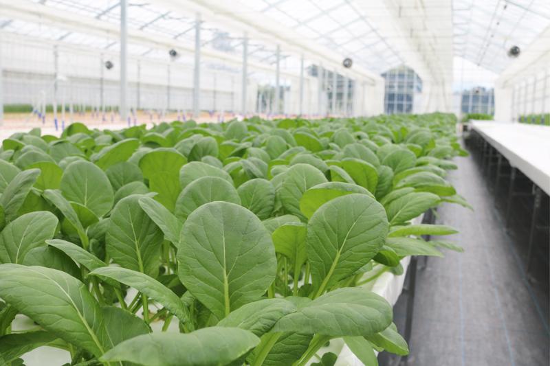 関連会社 有限会社光の植物工場